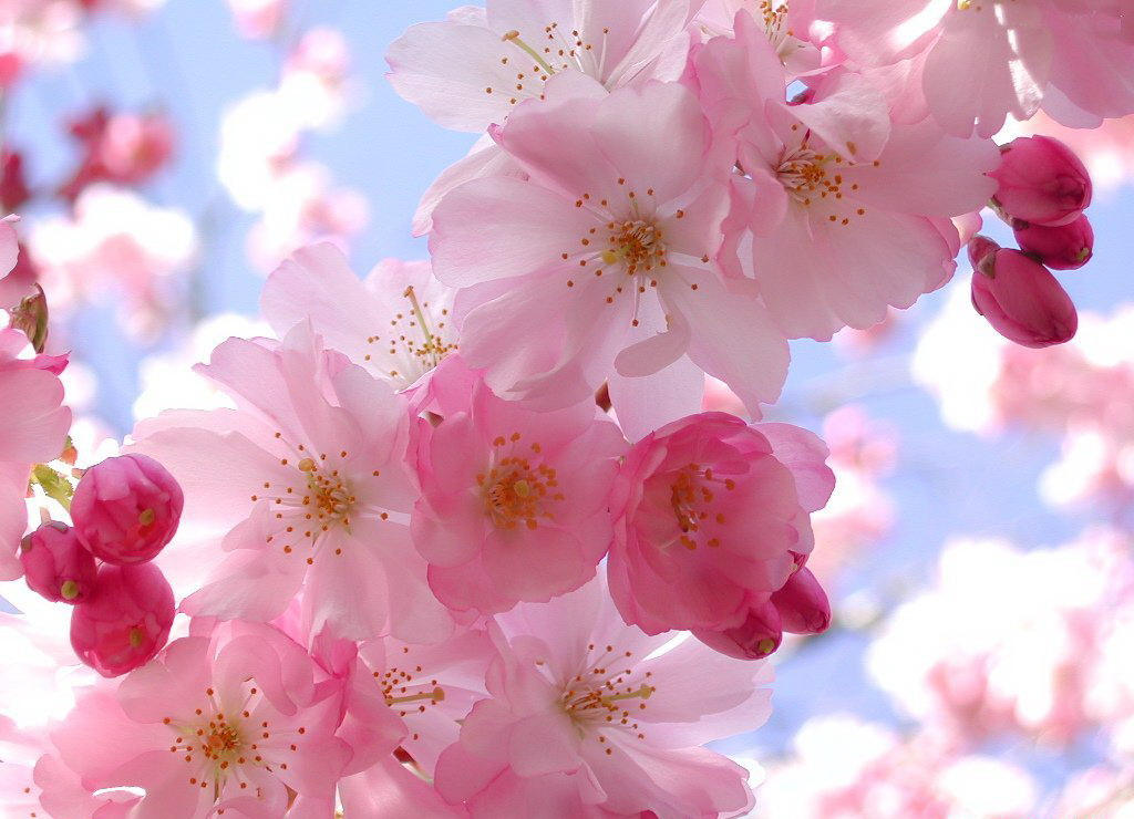 و بهار